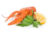 Crawfish and lemon — Stock Photo