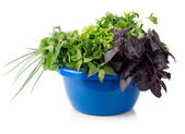 Greens in a bowl — Stock Photo