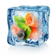 Fish rolls in ice cube — Stock Photo