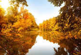 Autumn forest by the river — Stock Photo