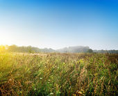 Dawn over the meadow — Stock Photo