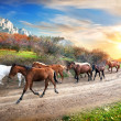 Stock Photo: Running horses