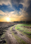 Country road through the plowed field — Stock Photo