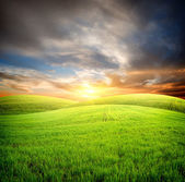 Field at sunset — Stock Photo