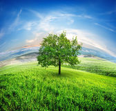 Meadows and tree — Stock Photo