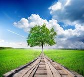 绿树和桥 — 图库照片