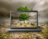 Tree and stumps on the monitor — Stock Photo