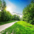 Country road into forest — Stock Photo #42002189
