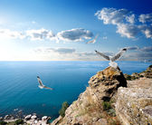 Seagulls and the sea — Stock Photo