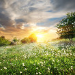 Sunrise over dandelions — Stock Photo