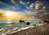 Seagull over sea — Stock Photo