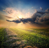 Beveled field of wheat — Stock Photo