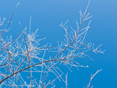 Frozen Twigs — Stock Photo
