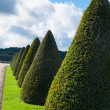 Stock Photo: Topiary trees