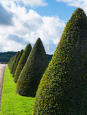 Topiary trees — Stock Photo