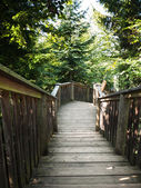 Natural wooden stairs — Stock Photo