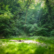 Stock Photo: Forest camping place