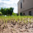 Growing up grass — Stock Photo