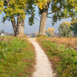 Trail between trees — Stock Photo