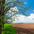 Field boundary in countryside — Stock Photo