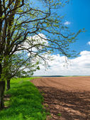 Field boundary in countryside — Stockfoto