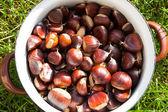 Pot of chestnut — Stockfoto