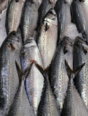 Fish on ice — Stock Photo