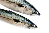 Mackerel on white — Stock Photo