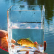 Small fish in glass jar on background of lake — Stock Photo #12483287
