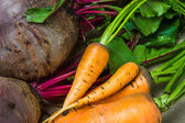 Raw carrots and beets — Stock Photo