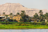 Palms and dwelling houses on the banks of the Nile — Stock Photo
