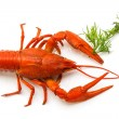 The red lobster - Stock Photo
