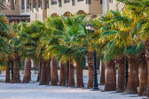 Promenade with palm trees on the shore of the Red Sea — Stock Photo