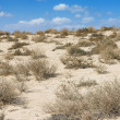Stock Photo: Arabidesert in scorching midday