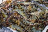 Krevety a jiné mořské plody na trhu v thajsku — Stock fotografie