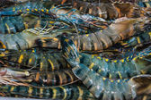 Shrimp and other seafood at a market in Thailand — 图库照片