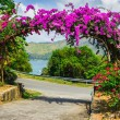 Stock Photo: Arch of purple flowers in Thailand