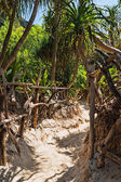Trail in the jungles of the island of Ko Phi Phi Lei in Thailan — Stock Photo