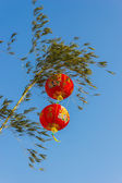 Chinese lanterns in a tree — Stock Photo