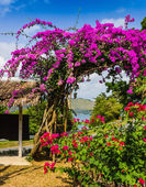 Arch of purple flowers in Thailand — Stock Photo
