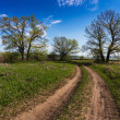 Ground road in summer sunny day — Stock Photo