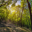 Green forest in the spring on a sunny day — Stock Photo