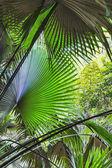 Fundo da palma deixa na selva da tailândia — Fotografia Stock