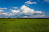 Meadow with green grass and blue sky — Stock Photo
