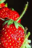 Summer ripe juicy red strawberry close-up — Stock Photo