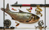 Fish with rods and tackle — Stock Photo