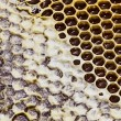 Close-up texture of honeycomb with honey — Stock Photo