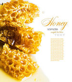 Close-up pieces of honeycomb with honey — Stock Photo