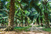 Tropical jungles of South East Asia — Stock Photo