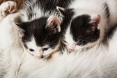 Motley kittens with the cat — Stock Photo